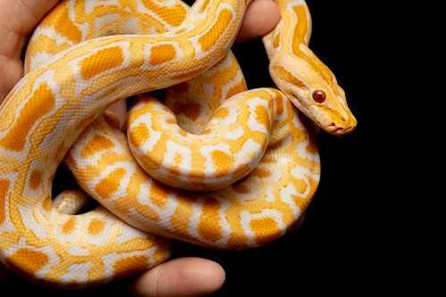 ETTODAY新聞雲 曾報導一則租屋處養的蛇「離奇失蹤案」,疑似因為蓋子沒蓋好,讓寵物蛇跑出去了。經過大家地毯式搜索,還是沒找到蛇,最後才發現原來寵物蛇躲在衣櫃裡整整一年。